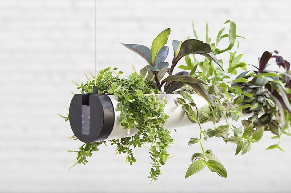 Charmant Indoor Garten Anlegen Geeignete Pflanzen Zeitgenössisch ...