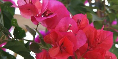 50% auf mediterrane Kübelpflanzen