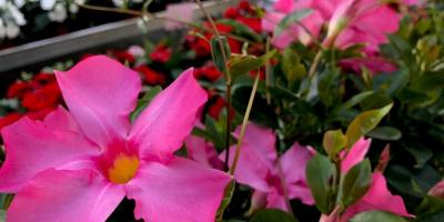 Blumen langnau am albis