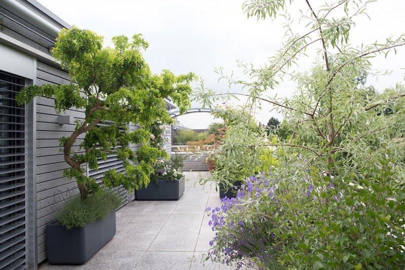 Terrassengestaltung raschle blumen pflanzen garten for Pflanzen terrasse