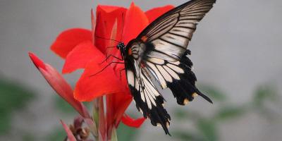 Schmetterlinghaus